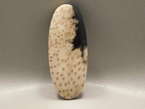Petrified Palm Wood Stone Bead Pendant #6