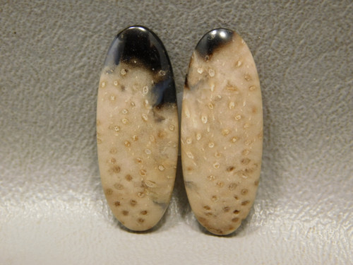 Fossilized Wood Louisiana Palm Matched Pair Ovals Cabochons #5