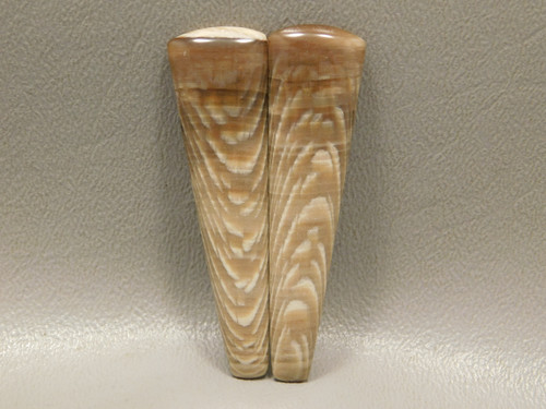 Badger Pocket Fossil Sycamore Wood Matched Pair Large Cabochons #19