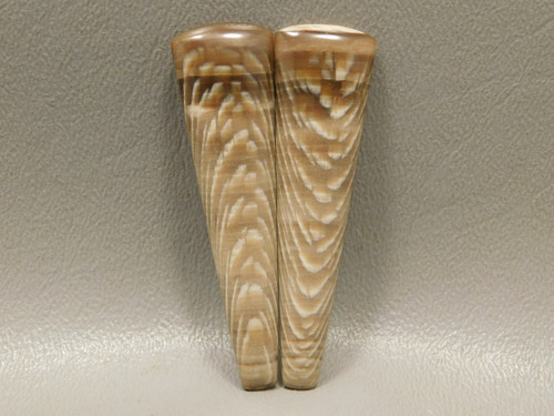 Fossilized Sycamore Wood Matched Pair Large Long Cabochons #20