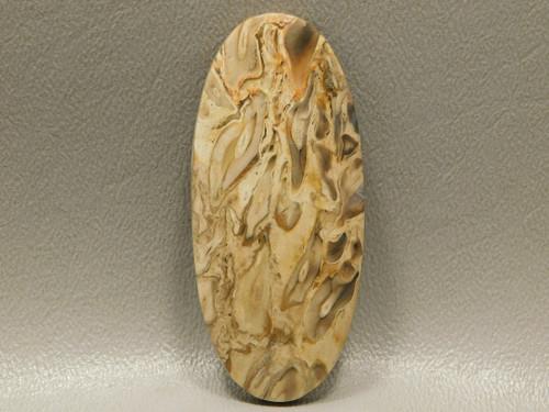 Fossilized Petrified Palm Wood Loose Jewelry Stone Cabochon #18