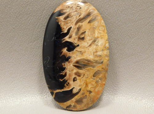 Fossilized Petrified Palm Wood Stone Cabochon Black and Brown #19