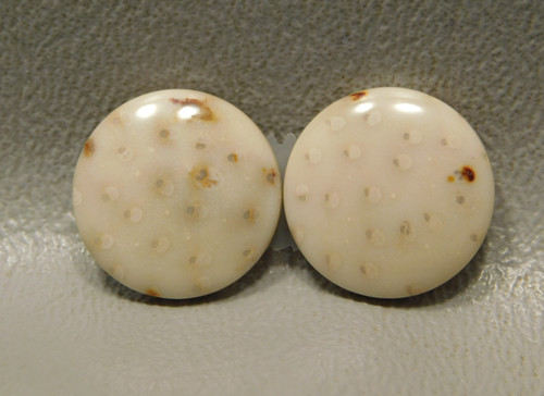 Petrified Palm Wood Matched Pair 15 mm Rounds Cabochons #16