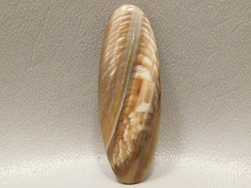 Sycamore Wood Oval Cabochons for Jewelry Making Supplies #13