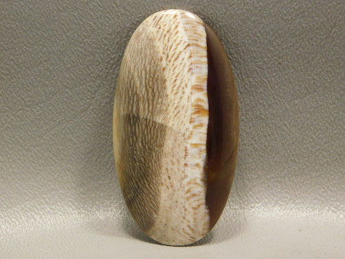 Fossilized Sycamore Fossil Cabochon Petrified Wood #24