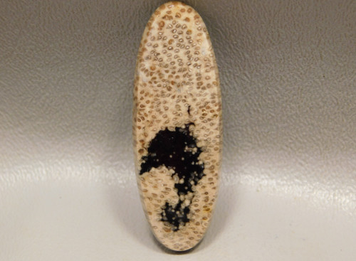 Petrified Palm Wood Fossilized Stone Jewelry Cabochon #10