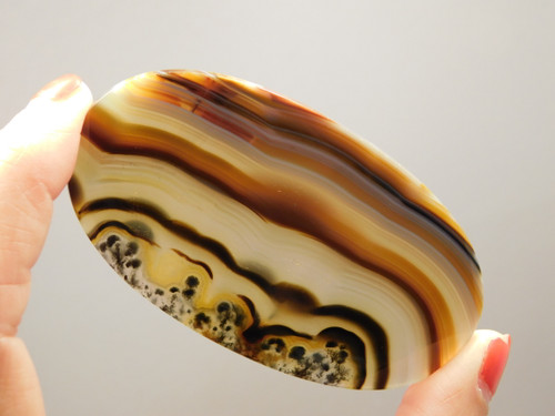 Piranha Agate Cabochon Large Collector Translucent Banded xl4