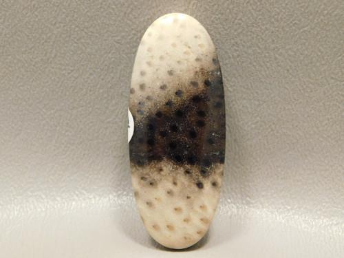 Petrified Palm Wood Louisiana  Side Drilled Stone Bead Pendant #1
