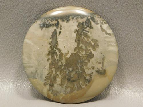 Cotham Marble Fossil Stone Cabochon 40 mm Round Stromatolite #20