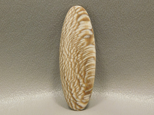 Fossilized Feather Pattern Sycamore Fossil Cabochon Petrified Wood #8