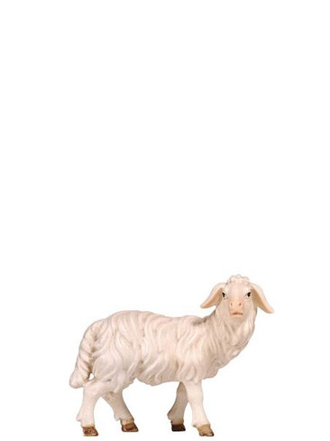 801262 Sheep Standing Looking Right Real Wood Painted Kostner Nativity from Pema in Italy