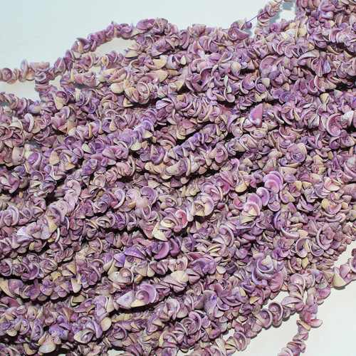Purple Cebu Beauty Shell  |$4.50 Wholesale
