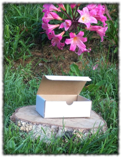 Die Cut Rectangle Box - 250x185x92mm 10 Pack