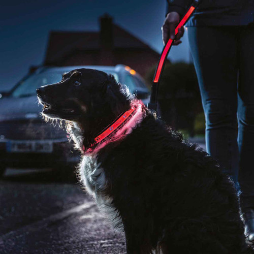 Nylon Super Bright LED Dog Collar