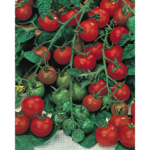 Grow Your Own Salad Seeds Collection
