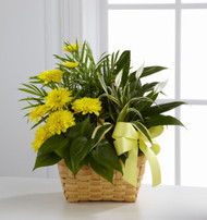 Chrysanthemums: The Ultimate Fall Flower