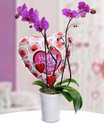 Orchid Amore w/ Mylar