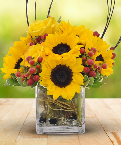 The Flowerloft's Sunny Days is a spectacular design as bright and bold as the dawn of a new day! Beautiful sunflowers and vibrant yellow roses highlight this wonderful bouquet with red berries accenting greenery in a glass cube vase.