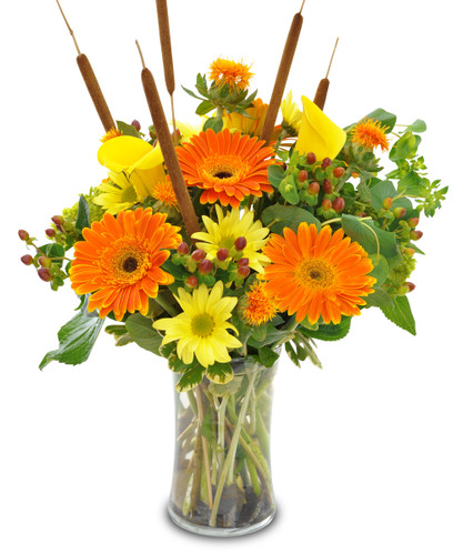 The Flowerloft's Autumn Daisy Delight is a beautiful design featuring big and bold Gerberas together with yellow daisies and Calla lilies. Hand-delivered in a tall glass vase with cattails, berries, and other fall favorites.