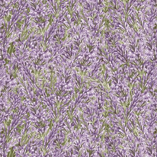 9873-56 Lavender    Lavender Garden