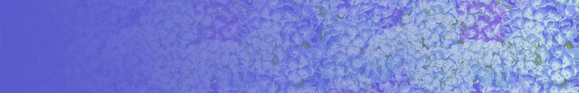 hydrangea-birdsong-header.jpg
