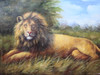 Beautiful medium sized painting, stretched but without frame, by Mike.  A male lion lays in tall grass, resting under a blue sky.