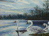 Beautiful medium sized painting, stretched but without frame, unsigned.  A group of white swans nest at the edge of steal blue water surrounded by dark trees.
