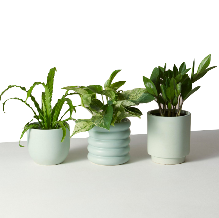 Plants for Beginners  Monthly Subscription