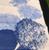 Hydrangea Blue Runner