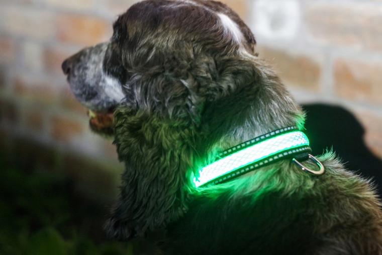 LED Light Up Pet Collar