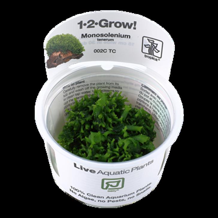 1-2-Grow! Monosolenium tenerum