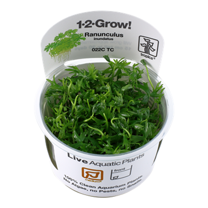1-2-Grow! Ranunculus inundatus