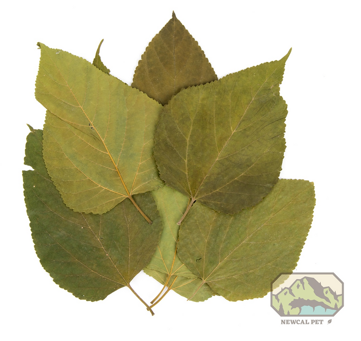 Mulberry Leaves 10 Pack
