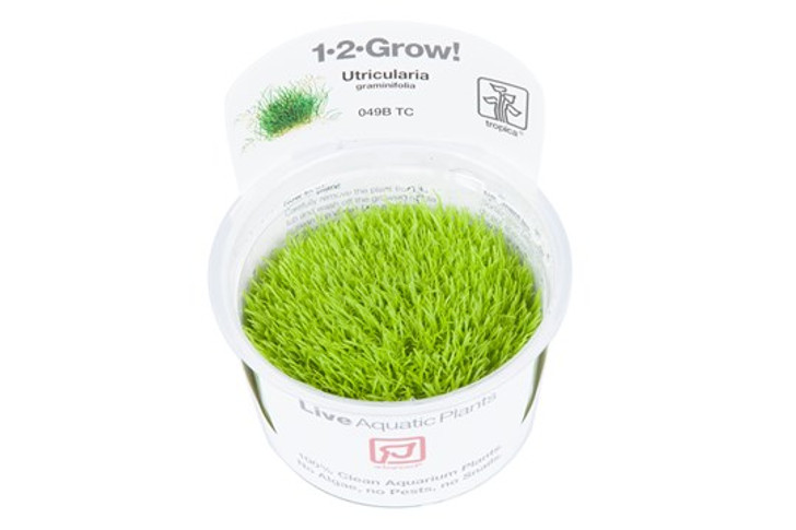 1-2-Grow! Utricularia Graminifolia