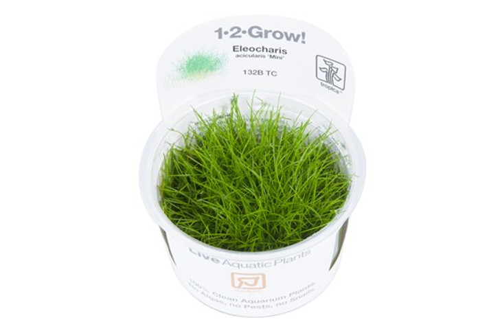 1-2-Grow! Eleocharis Acicularis