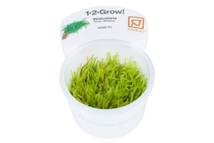 1-2-Grow! Vesicularia ferriei 'Weeping'