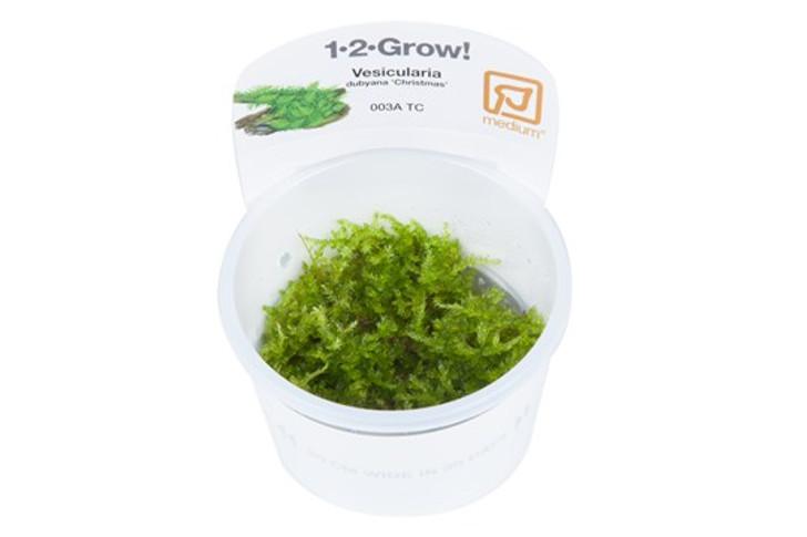 1-2-Grow! Vesicularia dubyana 'Christmas'