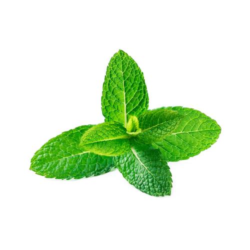 Spirit Mint