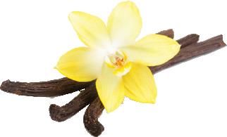 fresh-vanilla.png