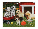 3D Livelife Poster - Puppy Playmates