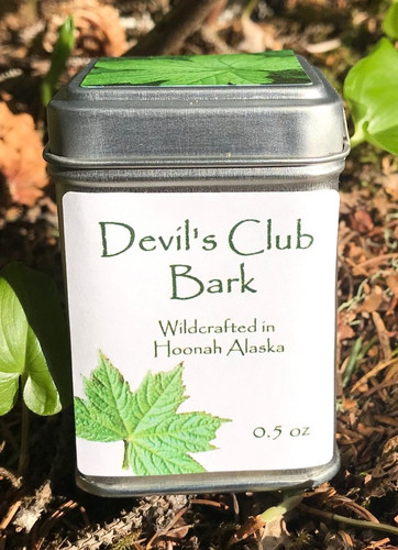 Devil's Club - Oplopanax horridum Wildcrafted in Hoonah Alaska