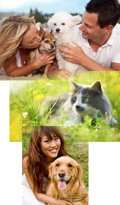 det-kiss-cat-dog.jpg