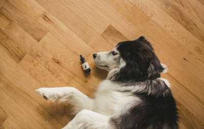 CBD FOR YOUR FURRY FRIENDS