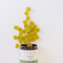 Gold Leaf Collection CBD infused gummies. Green Apple flavored and 10mg per gummy. Gluten Free