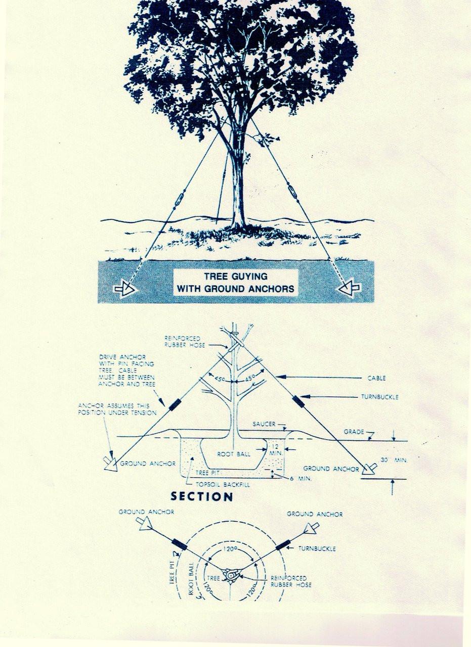 "10-14"" Diameter TREE GUYING KIT W/ T-buckles (TG/HD1014TB)"