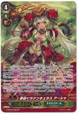 Dream-spinning Ranunculus, Ahsha SP G-BT04/S08
