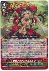 Dream-spinning Ranunculus, Ahsha RRR G-BT04/010