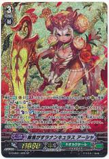 Ranunculus of Searing Heart, Ahsha G-CHB01/S05 SP