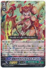 Ranunculus of Searing Heart, Ahsha G-CHB01/008 RRR