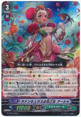 Ranunculus Flower Maiden, Ahsha G-TD12/003 RRR